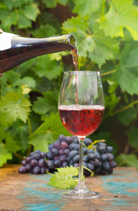 Kelner nalewa szkło czerwone wino, plenerowy taras, wina tastin zdjęcie stock
