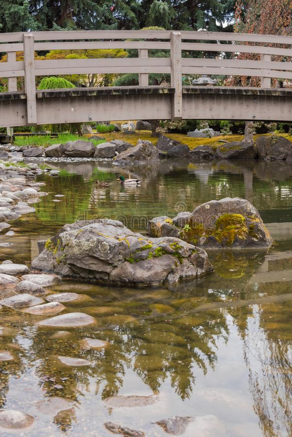 Mossy rocks and koi pond with arched bridge in Japanese Garden stock photos