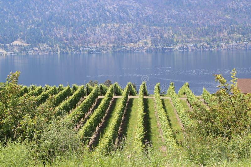Kelowna que vive no lago ou por uma borda da montanha imagens de stock royalty free