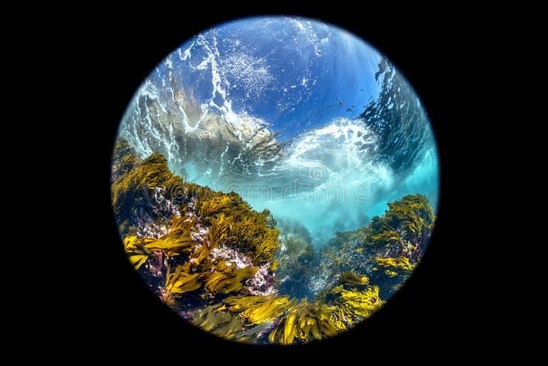 Kelp Καλιφόρνιας προοπτική κρεβατιών fisheye στοκ εικόνα με δικαίωμα ελεύθερης χρήσης