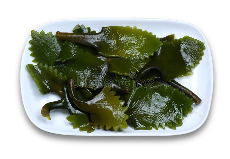 Kelp stockbild