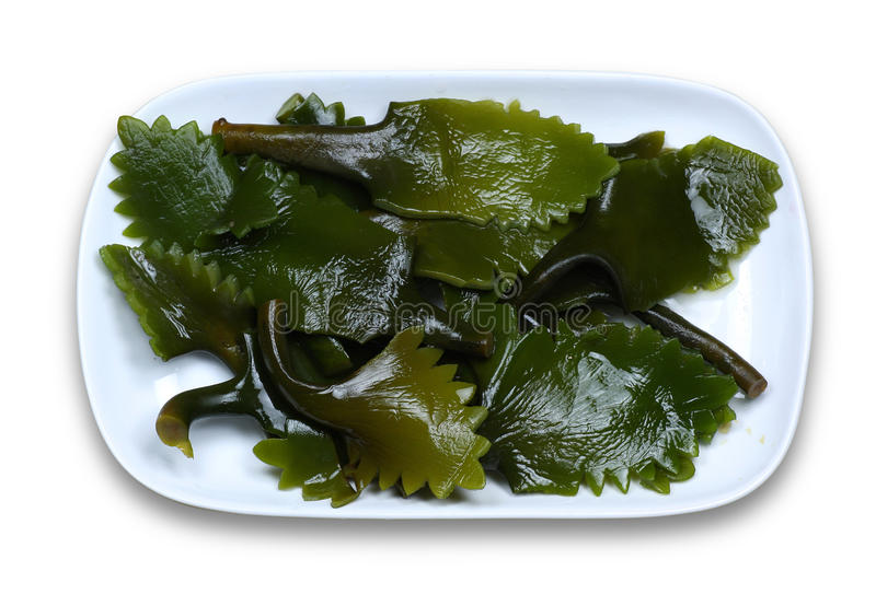 Kelp immagine stock