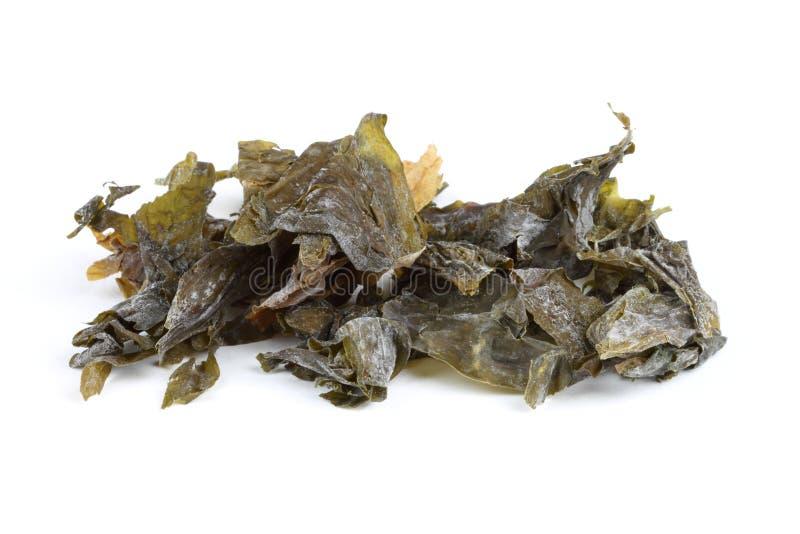 Kelp dello zucchero dell'alga immagine stock