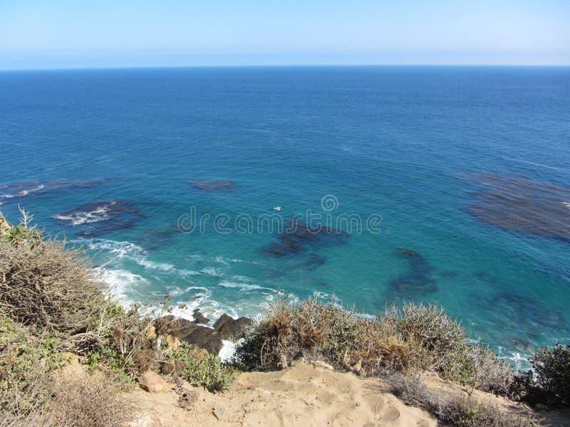 Kelp di galleggiamento fotografia stock libera da diritti