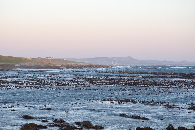 Kelp in een baai royalty-vrije stock afbeelding