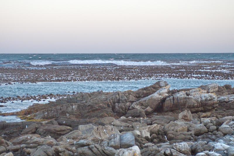 Kelp in een baai royalty-vrije stock foto's