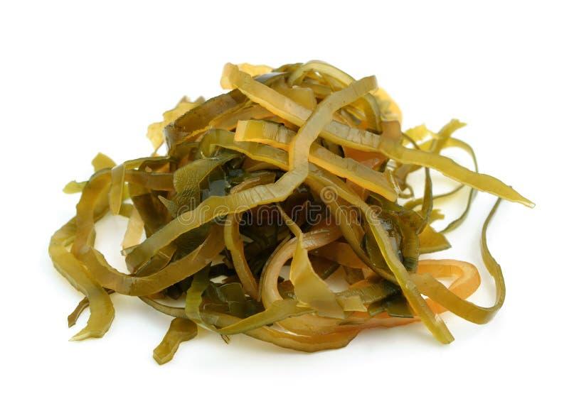 Kelp (laminaria) op de witte achtergrond royalty-vrije stock foto
