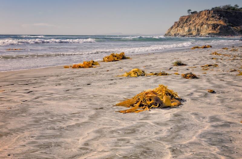 Kelp op Strand, Del Mar California royalty-vrije stock foto's