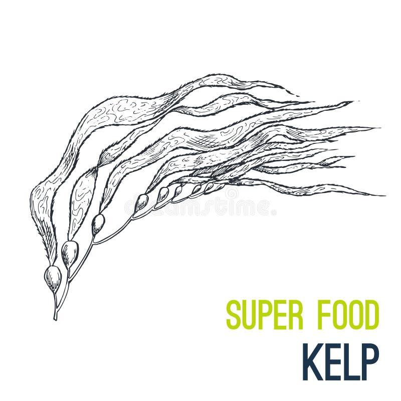 kelp Super karmowa ręka rysujący nakreślenie wektor ilustracji