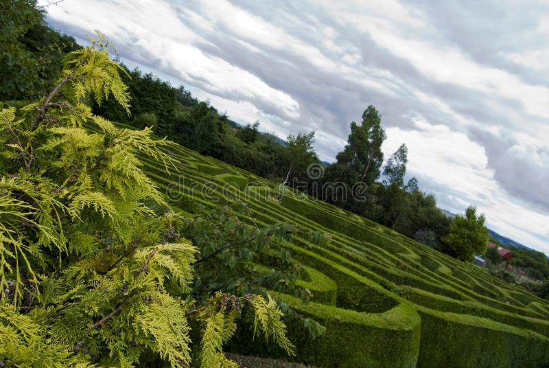 Keltisches Labyrinth in Wicklow, Irland. stockbild