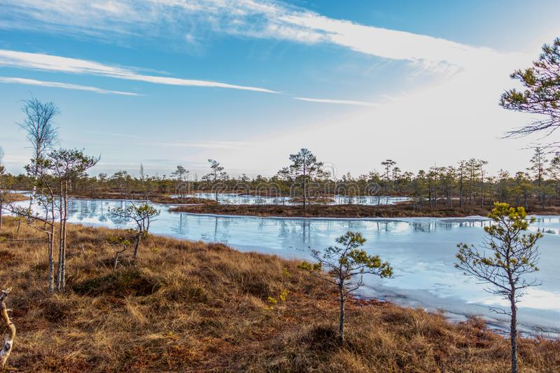 Kemeri Great swamp moorland frozen lake and morass vegetation at sunny winter day with blue sky, Latvia, Baltics, Northern Europe stock images