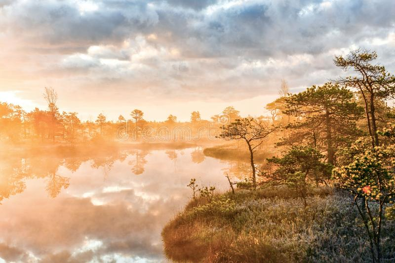 Kemeri. Latvia. Sunrise in the Kemeri bog in the cold autumn morning. stock image