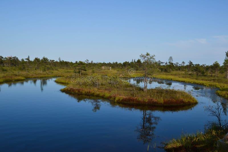 Kemeri Swamp royalty free stock photos