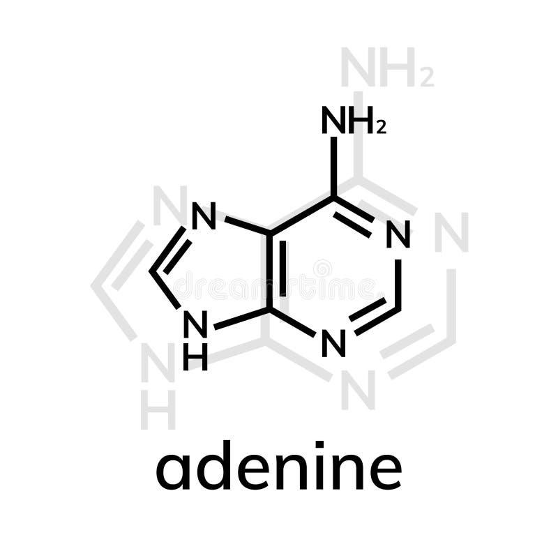 Kemisk formel för Adenine stock illustrationer