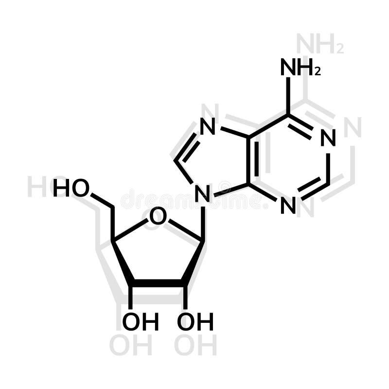 Kemisk formel för Adenosine stock illustrationer