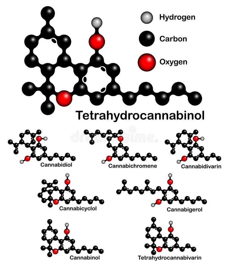 Kemiska formler av naturliga cannabinoids vektor illustrationer