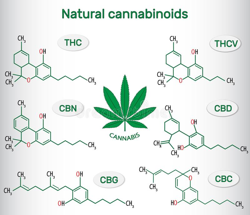 Kemiska formler av naturliga cannabinoids i cannabis: tetrahyd royaltyfri illustrationer