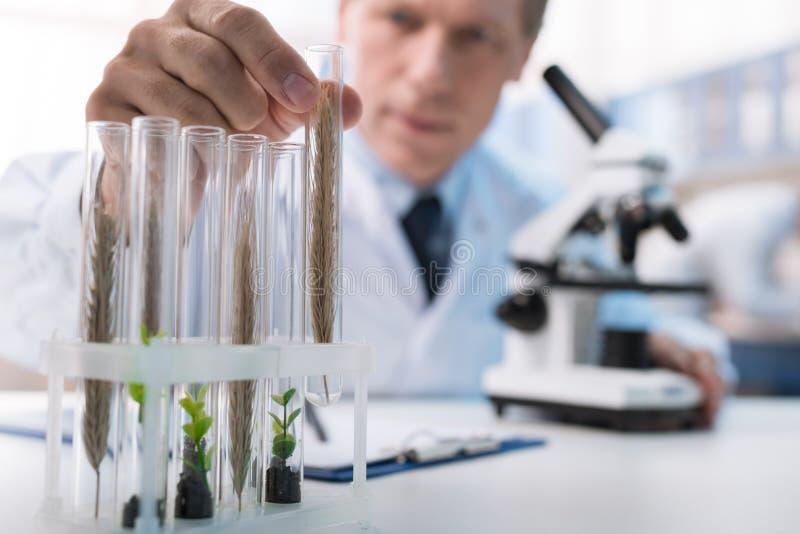 Kemist som arbetar med provrör arkivbild