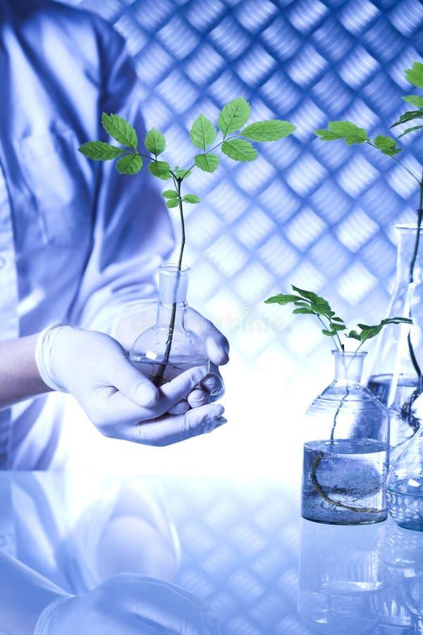 Kemiutrustning, experimentellt växtlaboratorium royaltyfria foton