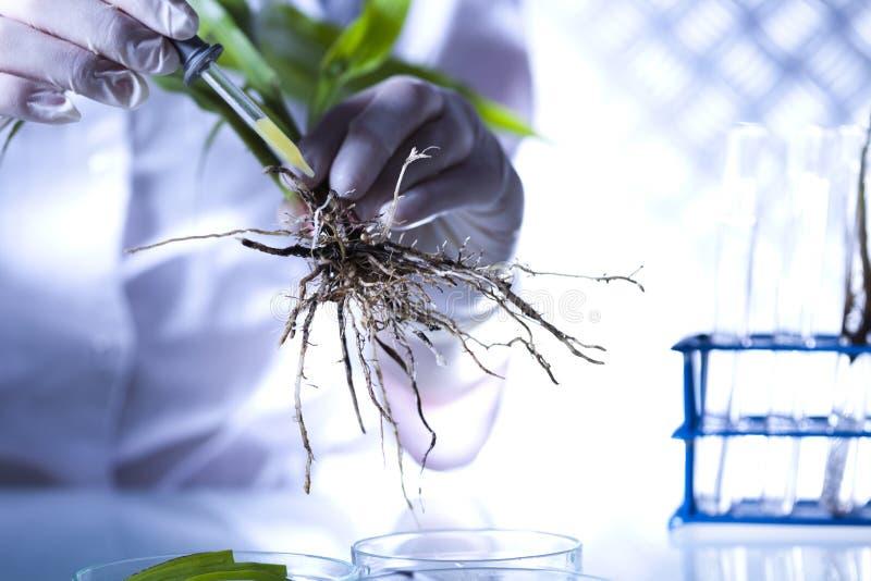 Kemiutrustning, experimentellt växtlaboratorium royaltyfria bilder