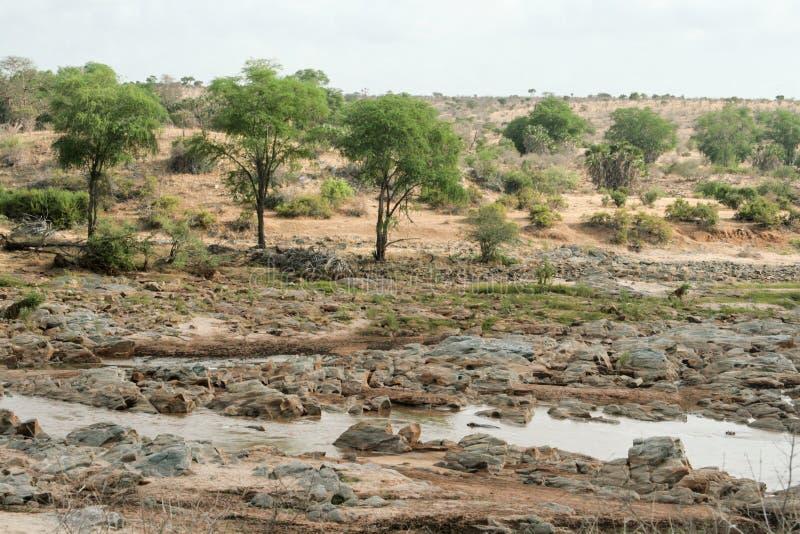 Kenia, Tsavo-het Oosten - Nationaal Park en de rivier stock foto's