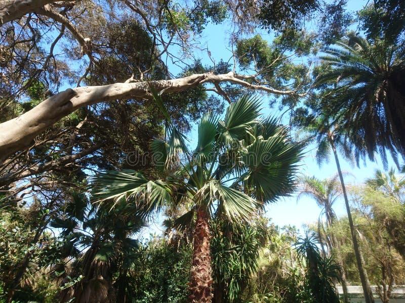 Exotic park. Kenitra Morocco nature royalty free stock photos