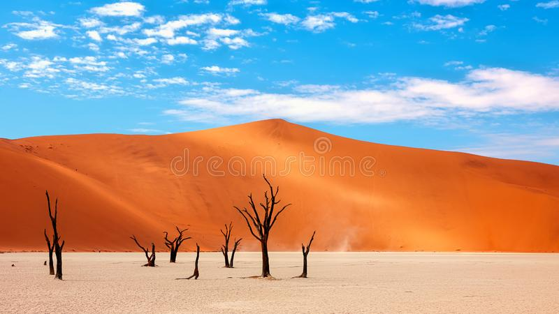 ?kennamibian trees arkivfoto