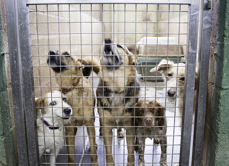 Kennel dogs locked stock photography