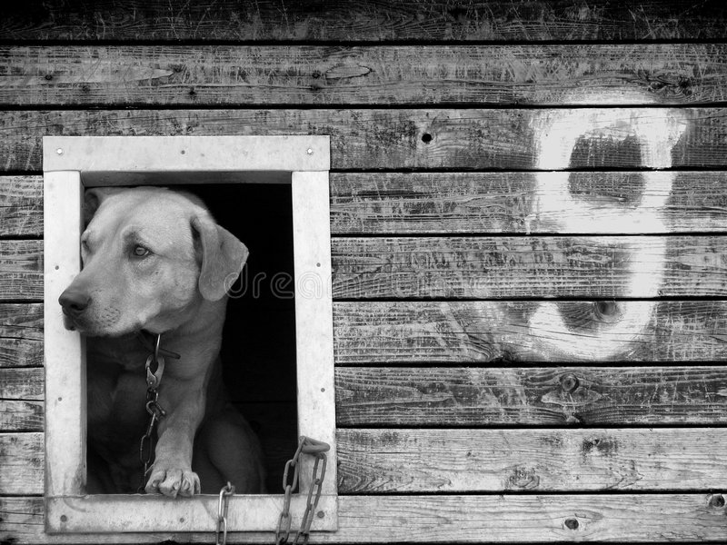 Kennel nr 9 stock image