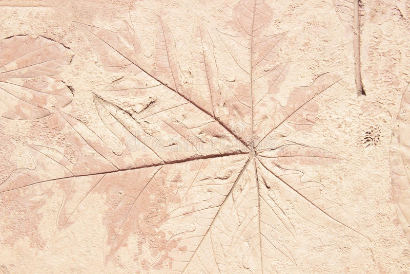Kennzeichen des Blattes auf dem Beton lizenzfreies stockbild