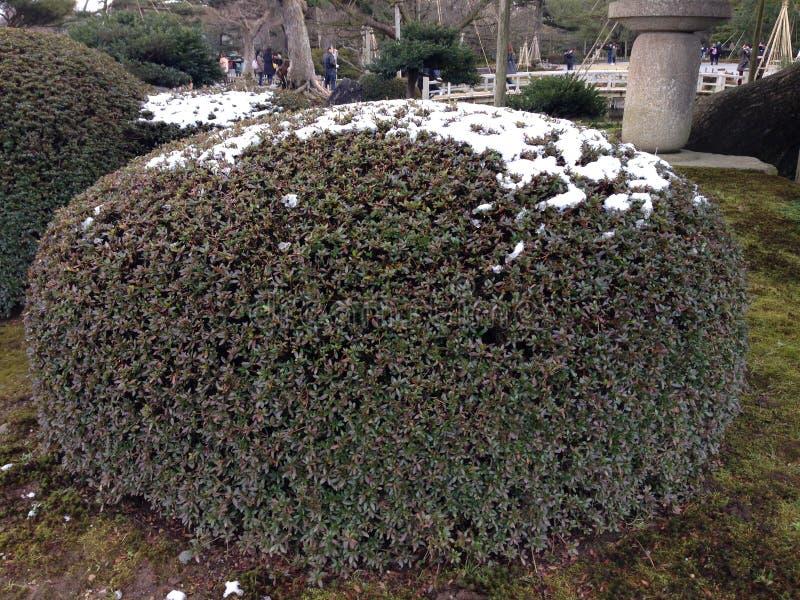 Kenrokuen trädgård royaltyfri fotografi