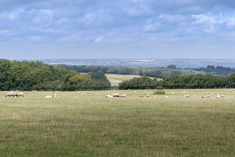 Kent Countryside View stockfotografie