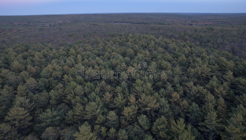 Kent County forest stock photography