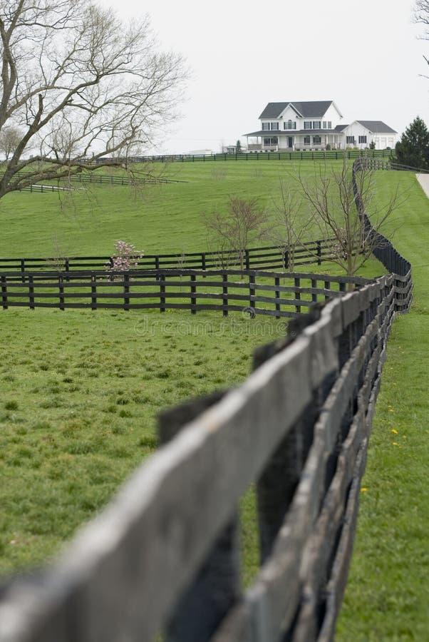 Download Kentucky horse farm stock photo. Image of luxurious, farmland - 4932362