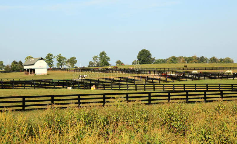 Kentucky konia park fotografia royalty free
