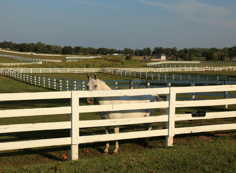 Kentucky konia park obrazy stock