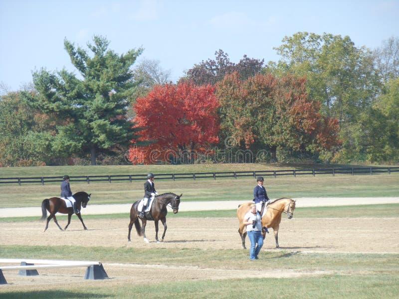 Kentucky konia park zdjęcie stock