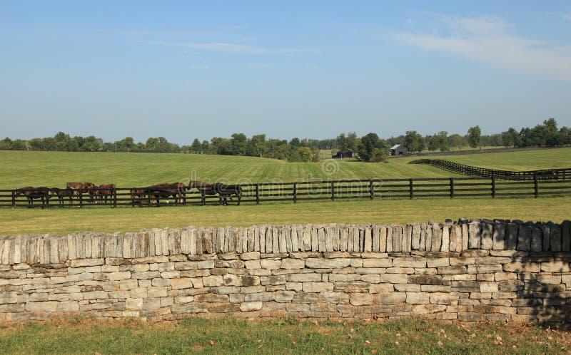 Kentucky konia rancho fotografia royalty free
