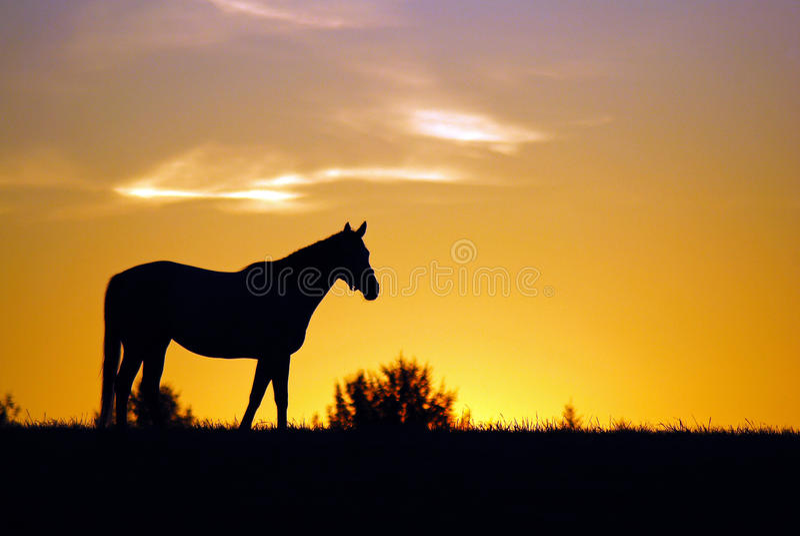 A Kentucky sunrise royalty free stock photo