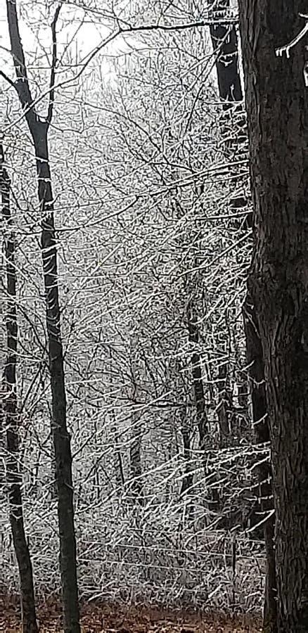 Kentucky-Winter lizenzfreies stockfoto
