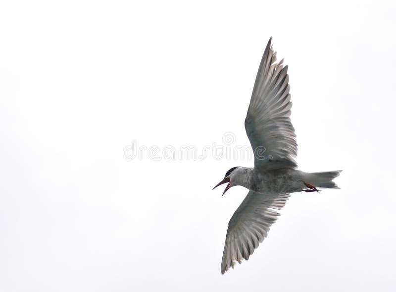 Kenya För Africa Fågelflyg Lake Naivasha Arkivbilder