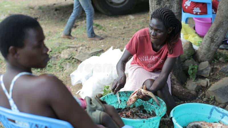 KENYA, KISUMU - 23 DE MAIO DE 2017: Peixes crus da limpeza do homem e da mulher junto Família em África que prepara o jantar usan imagens de stock