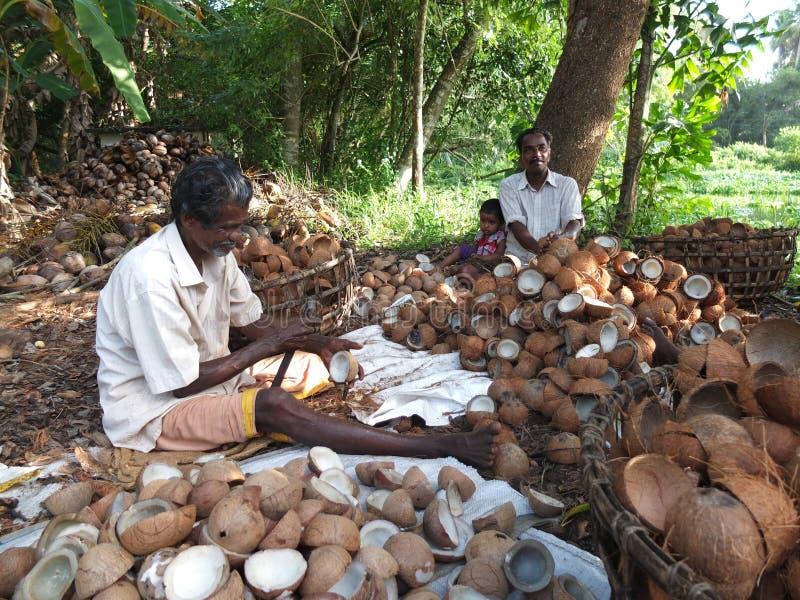 Kerala Backwaters, India Editorial Image