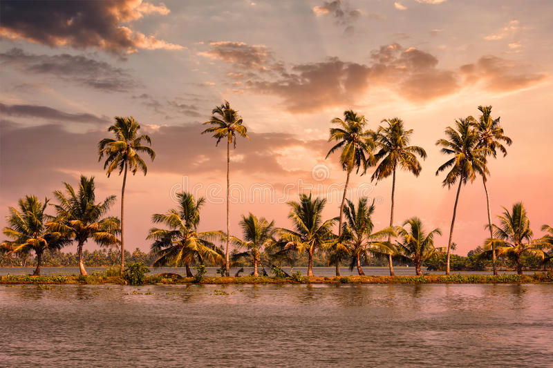 Kerala backwaters with palms on sunset. Kerala travel tourism background - Palms at Kerala backwaters. Allepey, Kerala, India on sunset. This is very typical royalty free stock photography