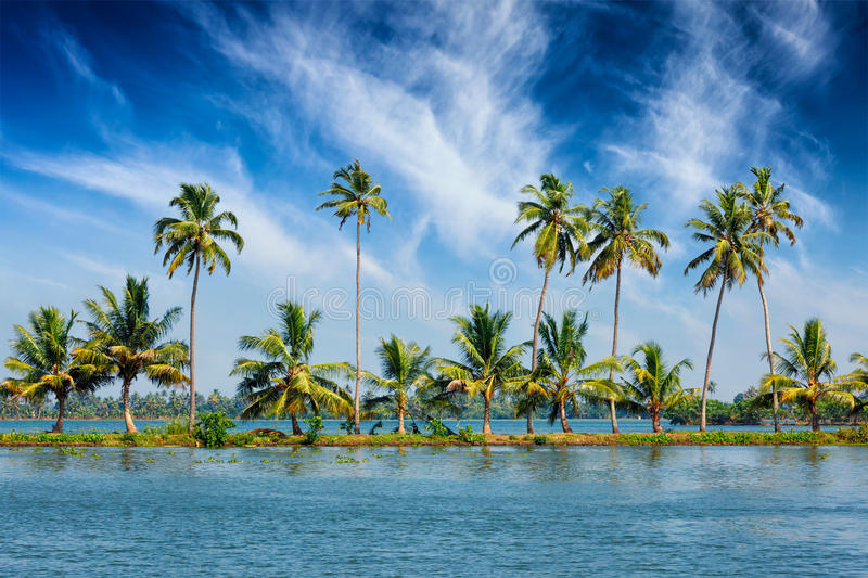Kerala backwaters with palms. Kerala travel tourism background - Palms at Kerala backwaters. Allepey, Kerala, India. This is very typical image of backwaters stock photography