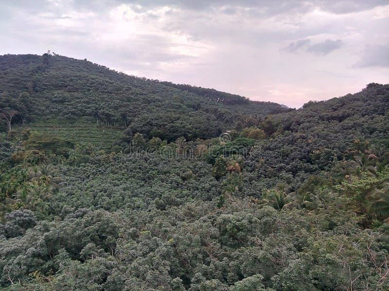 Kerala berg royaltyfri bild
