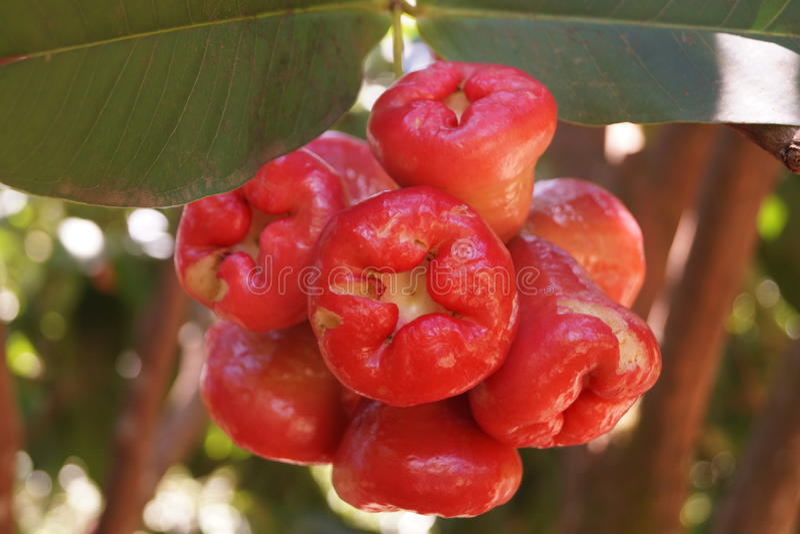 Kerala fruit stock images