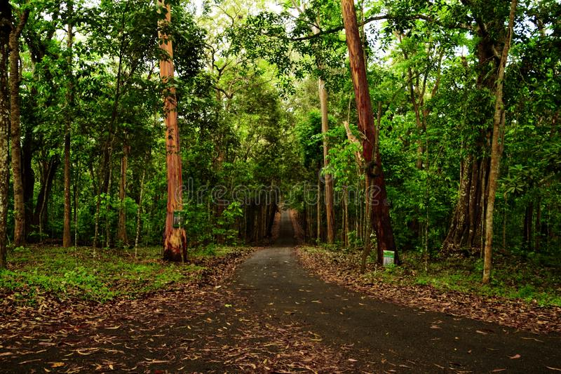 A lonely deserted road through a dense forest stock images