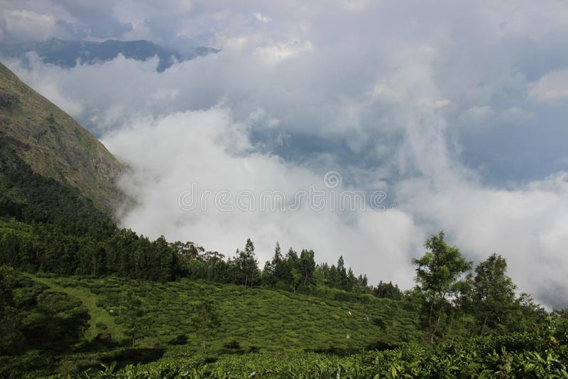 Kerala munnar tea estate royalty free stock photography