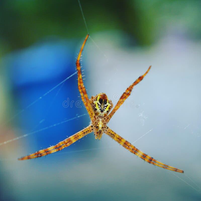 Kerala natura, pająk zdjęcia stock